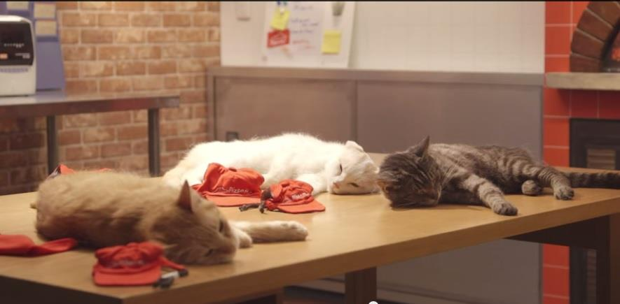 Pizza Cat/youtube