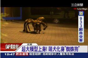 蜘蛛狗嚇人1200