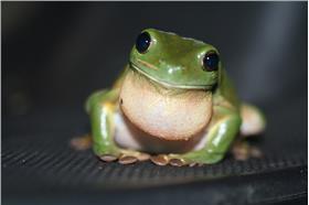青蛙-圖/Flickr_Stephen Michael Barnett