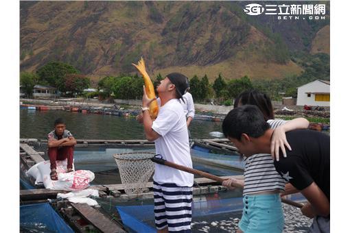 多巴湖金魚