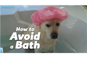 毛小孩怕洗澡-YouTube