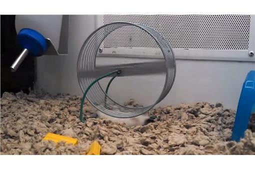 老鼠(YouTube)