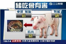 飼油不餵豬1800