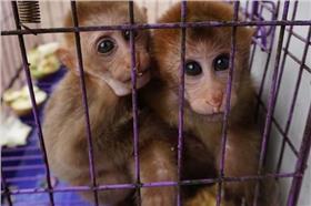 殘忍!保育動物在雲南邊境成盤中餐 公務員疑大啃珍禽異獸(網易新聞)