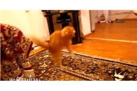 貓變身超級瑪莉 圖/翻攝自ERA FM & ERA TV 臉書