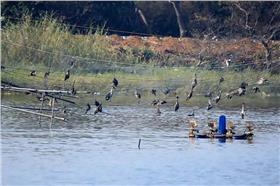 候鳥悲歌 (臺灣野鳥保育協會)