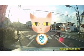 貓咪與老奶奶/youtube