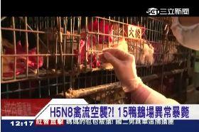 環南查H5N81200
