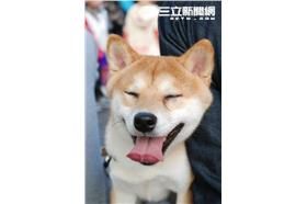 狗狗(朱凱弘攝影)