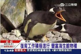 海生企鵝19T18 1113