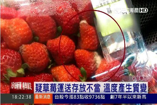 """什麼!草莓竟然""""長毛""""了 原來是發霉"""