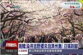 櫻花是誰的1600