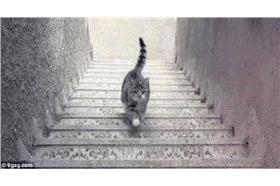 貓咪上樓梯還是下樓梯?/9gag