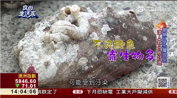 海底帝王聖品~生態養殖台灣鮑