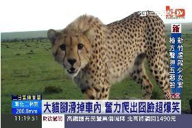 最腳滑獵豹1100
