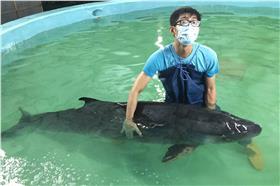 抹香鯨擱淺救援