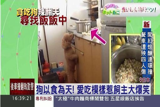 """嗆辣直衝腦門! 大狗舔""""芥末""""仙貝狂跳"""