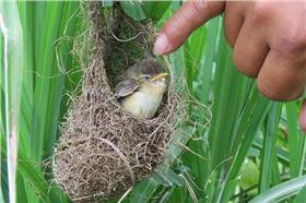 病態攝影,鳥巢 圖/翻攝自《自然攝影中心》