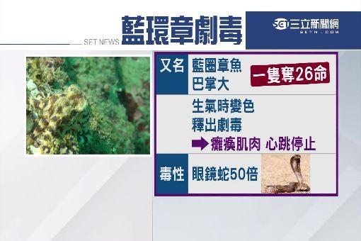藍環章魚毒性可奪26命 潛水客竟捧上岸