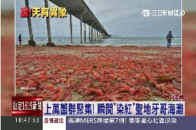 龍蝦霸海灘1800