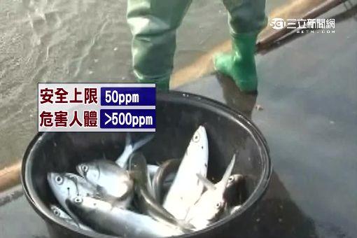 吃虱目魚中毒 組織胺釀禍!嚴重休克