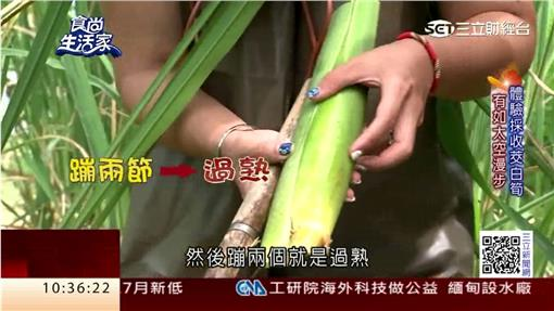 食尚生活家:失業回鄉從農 創造美人腿商機