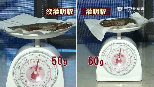 溫州驚現「灌膠蝦」 增量提升賣相