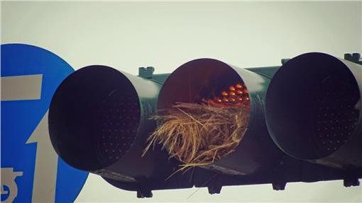 鳥巢,築巢,黃燈,高雄,岡山,紅綠燈-翻攝自爆料公社https://www.facebook.com/groups/451357468329757/permalink/603447119787457/