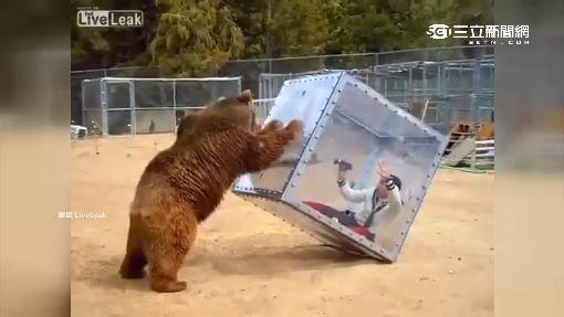 日本綜藝節目賣命 搞笑藝人和熊對決