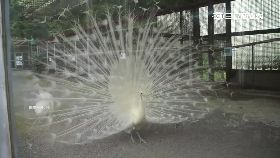 白鳥獸吉凶1800