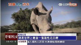 白犀瀕絕種1800
