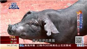 黑豬肉/時尚生活家