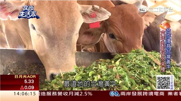 最新鮮的牛肉!從產地到餐桌 走出台灣黃牛自己的路