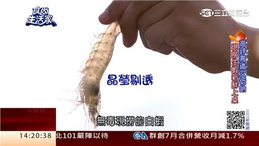 吃中藥長大的蝦!生態養殖天然無毒