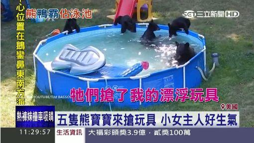 有熊出沒! 黑熊家族闖後園開泳池趴