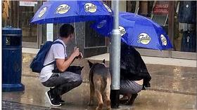 遮雨/每日郵報
