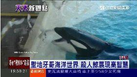 黃雀殺人鯨1100
