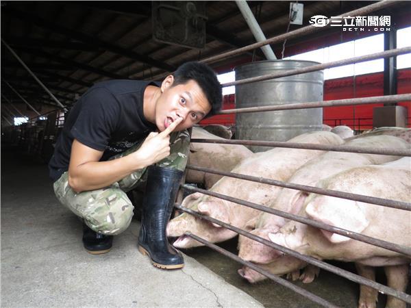 姚淳耀與小豬們培養了深厚的感情。