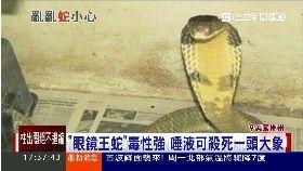 ev毒蛇大逃亡1700