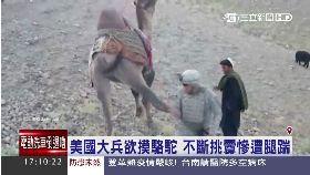 駱駝踹士兵1700