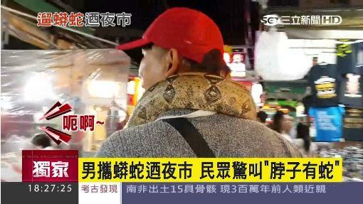 """男攜蟒蛇迺夜市 民眾驚叫""""脖子有蛇"""""""