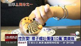 吃螺賺珍珠1100