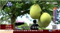 翻攝食尚生活家 柚子