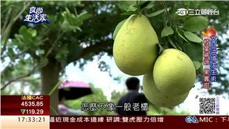 郭家種柚傳百年 挑柚越「小」越好吃
