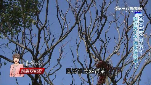 21年了...樹就是長不大! 揭密大安森林公園
