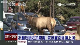 麋鹿壓馬路1200