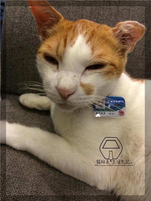 貓站長_咪咪(圖/翻攝自貓站長的生活札記臉書)