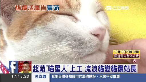 """超萌""""喵星人""""上工 流浪貓變貓纜站長"""