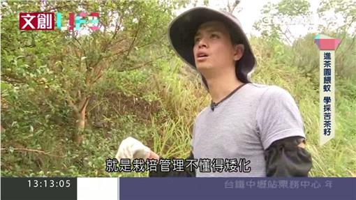 文創LIFE 茶籽油05