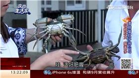 食尚生活家:引海水養蘭陽蟳 蟹黃蟹膏鮮甜濃郁